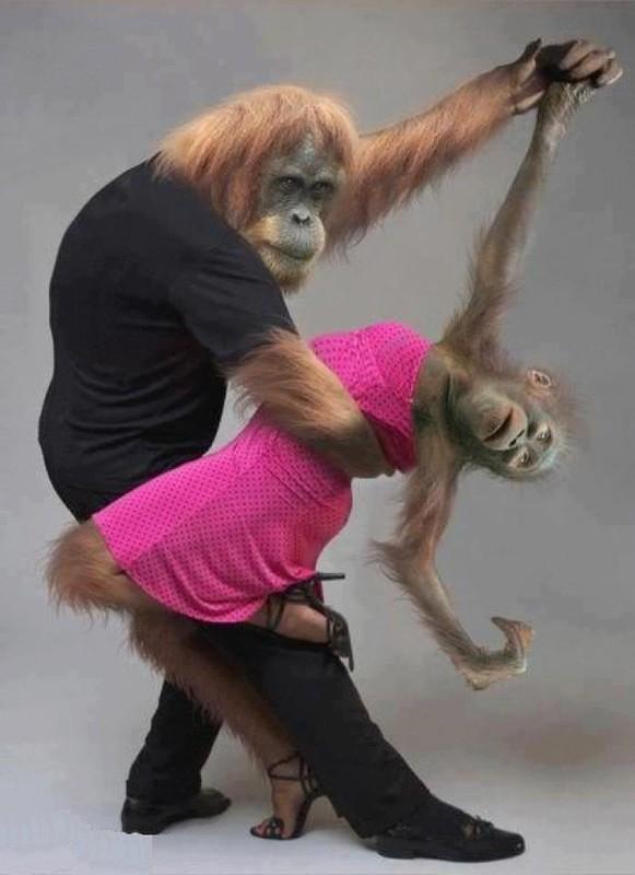 Danse 151